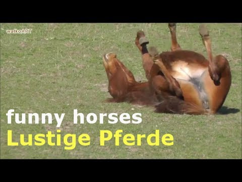 lustige pferde funny horses youtube. Black Bedroom Furniture Sets. Home Design Ideas
