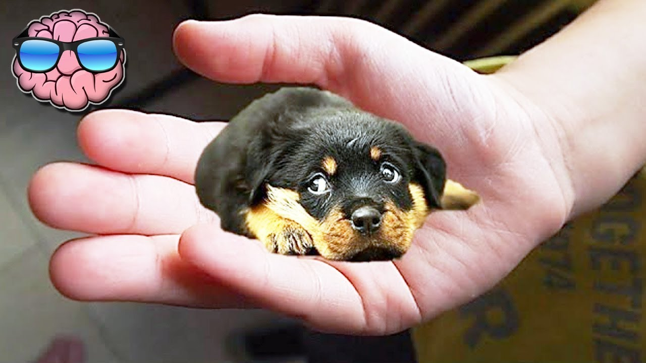 Top 10 Smallest Dog Breeds Youtube