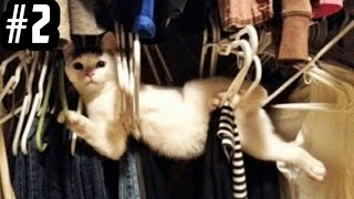 Funny Cats: The Best and Funniest Cat Compilation Videos # 2.