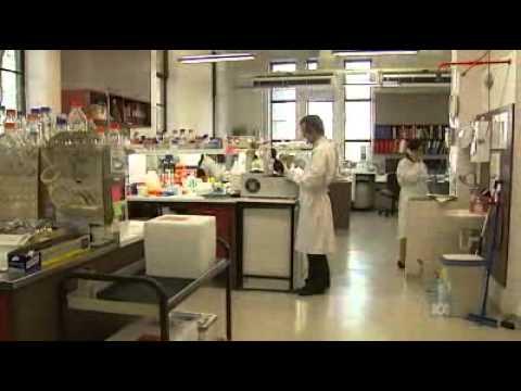 Scientists begin dengue control program