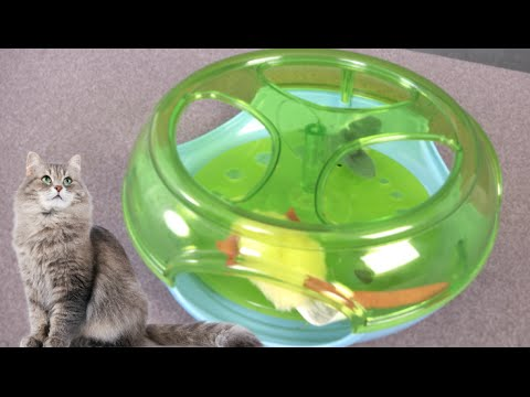 Mouse Trap Cat Toy from Toys R Us Pets
