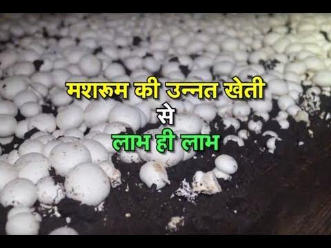 Gaon Kisan - Mushroom farming special
