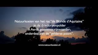 de Blonde d'Aquitaine Aerdt 03