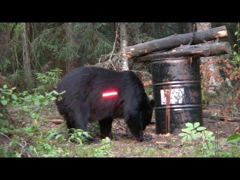 Northern Wilderness Bear Outfitters Hunt