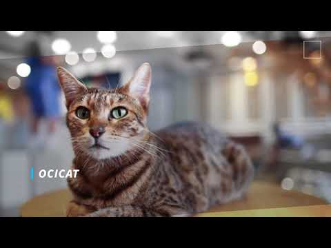 The most beautiful breeds of cats in the world