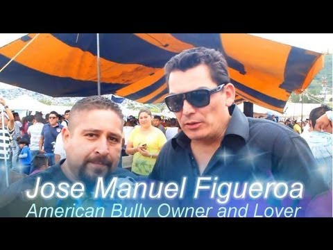 JOSE MANUEL FIGUEROA PLATICA SOBRE EL AMERICAN BULLY JOSE MANUEL FIGUEROA