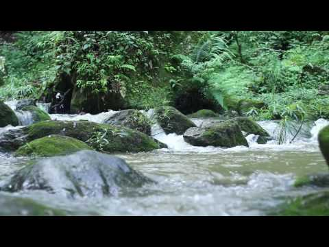 Relaxing Nature Video, Sounds of a Forest-Natural Soothing Sound of a Water & Bird Sounds - HD 1080