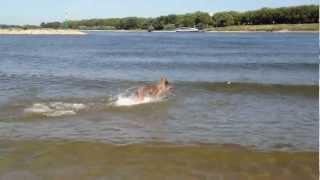 Hundestrand Am Rhein, Der Strand Für Hunde Spielen Im Wasser