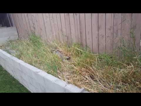 Download Youtube: Today's workout routine is to clean another portion of the backyard!