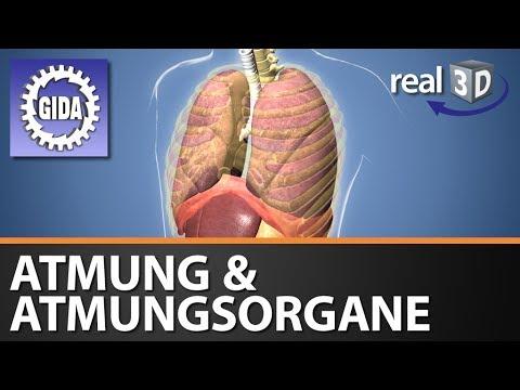 GIDA - Atmung & Atmungsorgane - Biologie - real3D Software (Trailer ...