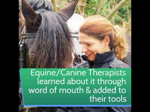 So just how did PhysioPod get to work in Equine and Canine Rehab?