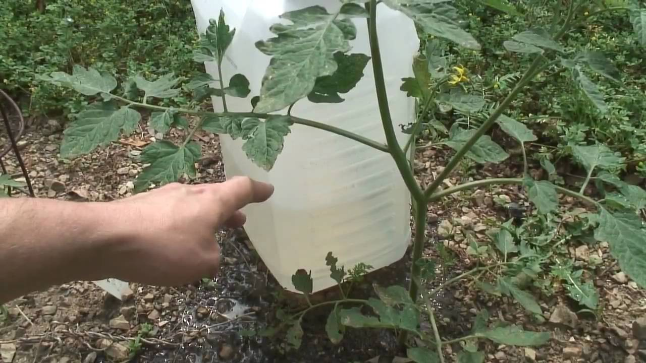 Homemade Garden Drip Irrigation With Rainwater Youtube