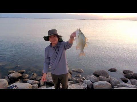 North Dakota White Bass Fishing J4 Weekend