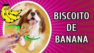 como fazer biscoito caseiro para cachorro receita