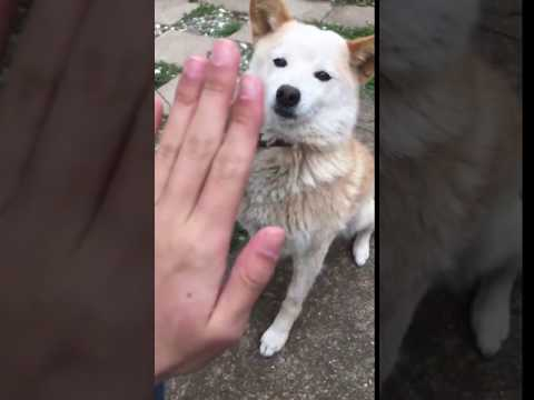 High five goes wrong
