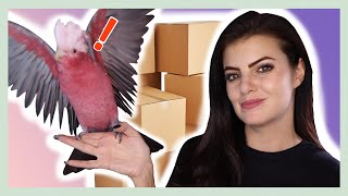 My Parrots Reaction to BIG TOWER OF BOXES! My Cockatoo#39s Crazy Reaction! VINNY SUBTITLES