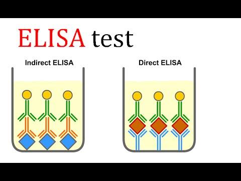 ELISA test - YouTube