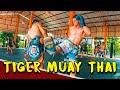 TIGER MUAY THAI VLOG (PRIVATE CLASS)