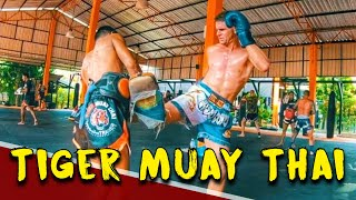 TIGER MUAY THAI VLOG (PRIVATE CLASS)