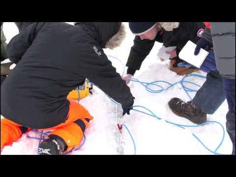 Combining geophysics and whaling knowledge to study sea ice