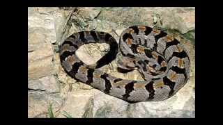 9 most dangerous snakes in the US