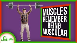 Your Muscles Do Remember... But Not The Way You Think