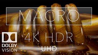 Macro HDR 4K 60fps Dolby Vision   Laowa 24mm Probe Lens