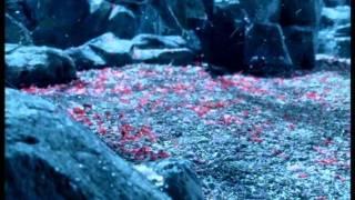 София Ротару - Вишнёвый сад (2004)