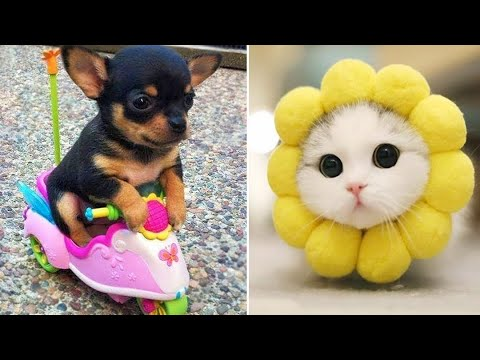 Baby Animals  Funny Cats and Dogs Videos Compilation (2019) Perros y Gatos Recopilacin #10