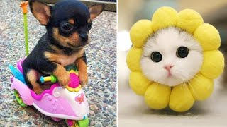 Baby Animals 🔴 Funny Cats and Dogs Videos Compilation (2019) Perros y Gatos Recopilación #10
