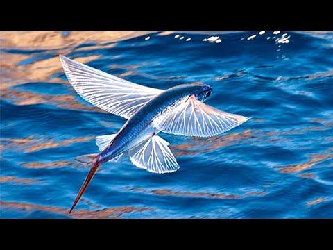 मछली जो अब