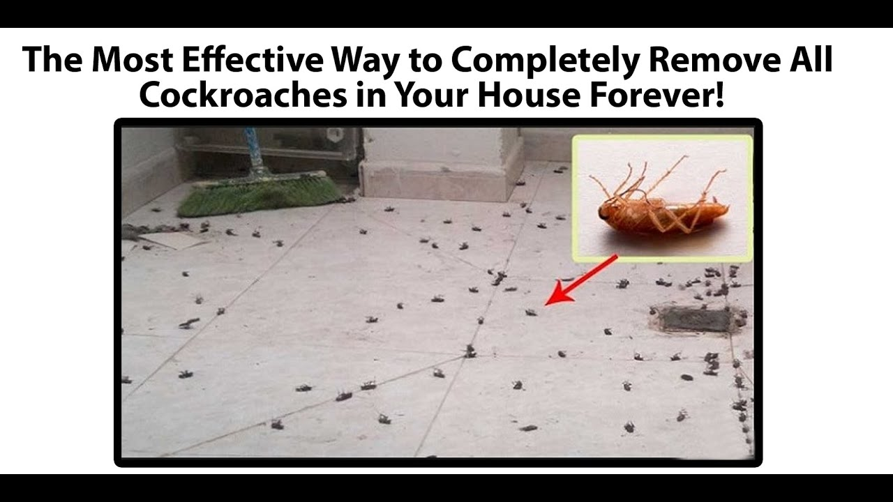 The Most Effective Way to Completely Remove All Cockroaches in Your ...