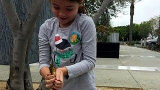 طفلة تنقذ مجموعة «بط» من الموت (فيديو)