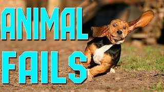 Epic Animal Fail Compilation | Funny animals pets dogs cats | cute and funny