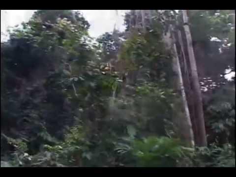 """Sustainable Development in the Amazon"""