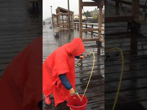 Les Davis Pier WA Squid Fishing