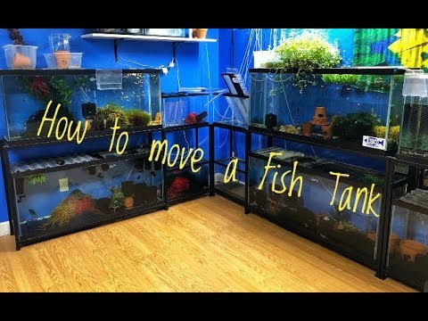 HOW TO MOVE A FISH TANK: Part 1