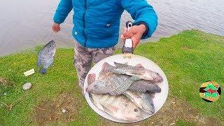 como pescar y cocinar tilapias
