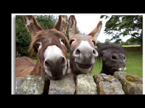 Eşek Sesi - The Sound of a donkey - Donkey Sound