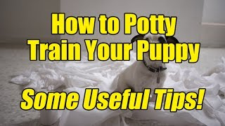 How to Potty Train a Puppy - Some Useful Tips!