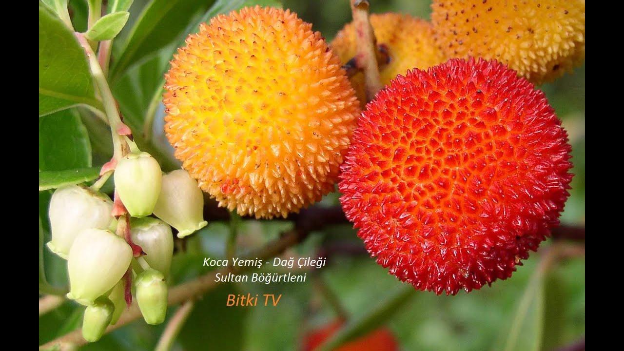 Liçi Meyvesi Neye İyi Gelir