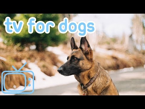 Chill TV for Dogs and Puppies! Stop Anxiety and Keep Your Dog Calm!