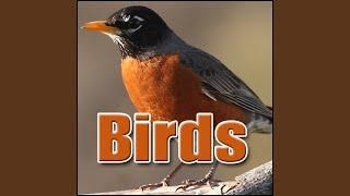 Bird, Woodpecker - Yucatan Woodpecker: Calling, Birds