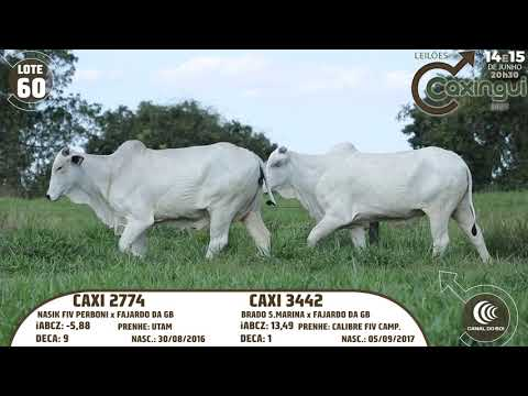LOTE 60   CAXI 2774, CAXI 3442