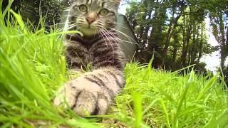 """Телеканал """"Домашние животные"""" - Вся правда о кошках"""