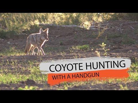 Coyote With A Taurus Handgun - Fred Eichler
