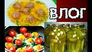 Начищаю кастрюли, готовлю: суп с фрикадельками, яичница с помидорами, мариную  огурцы. Муська.