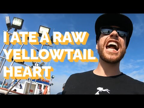 Catalina Island Fishing Trip Out Of Davey's Locker Newport Beach, CA | EATING YELLOWTAILS HEART