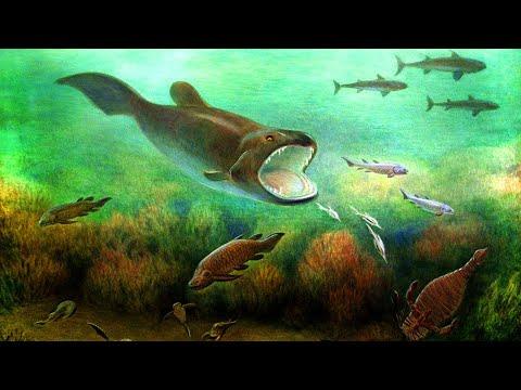 Как появились рыбы на земле