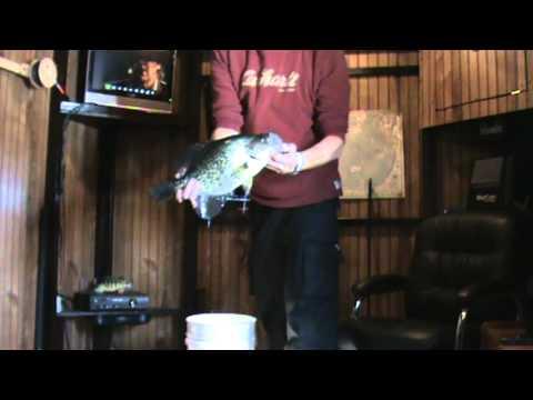 Caught a huge 18 crappie 3 pound 11 ounce on lake waconia for Lake waconia fishing report